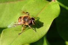 Macro Beestjes